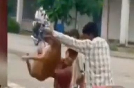 Video, dog, being, thrown, Narmada Canal