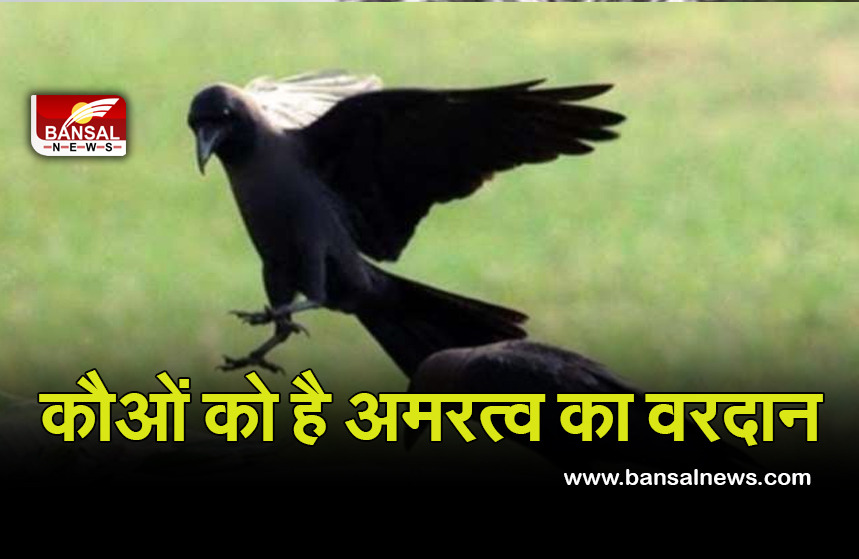 importenceo of crow