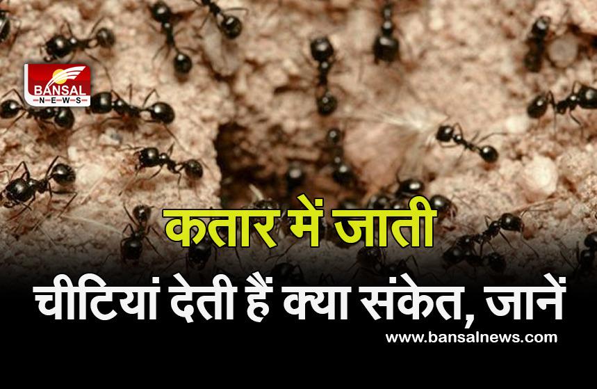 vastu tips for ant
